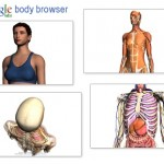 Google Body Browser – Explore Human Body and Anatomy in 3D