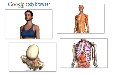 Google Body Browser Explore Human Body And Anatomy In 3d Quertime