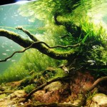 Beautiful Aquascaping Photo Collection