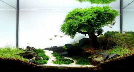 aquascaping02