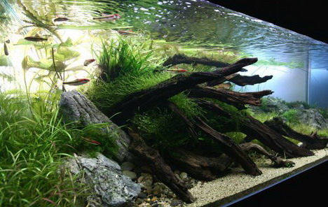 aquascaping03
