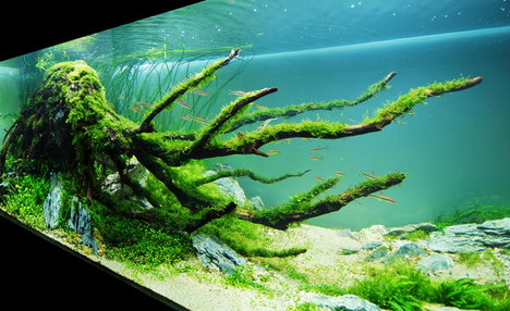 aquascaping04