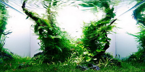 aquascaping05