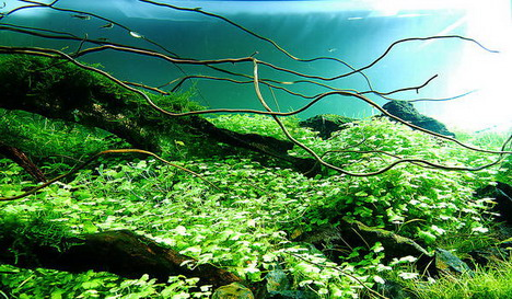 aquascaping06