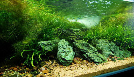 aquascaping07
