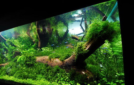 aquascaping08