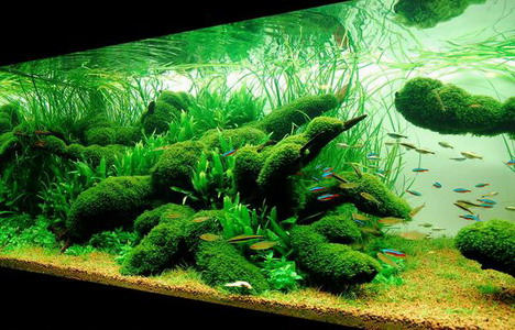 aquascaping09
