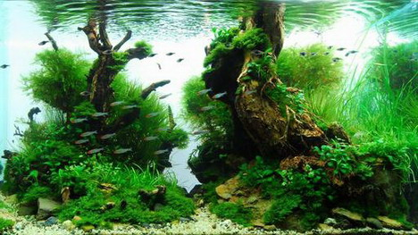 aquascaping10
