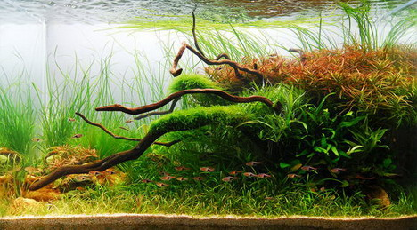 aquascaping11