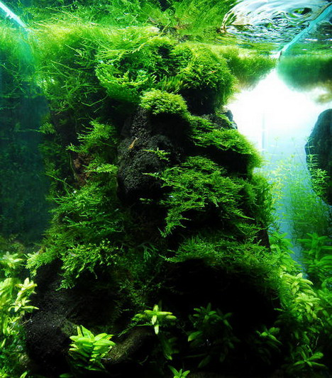 aquascaping13