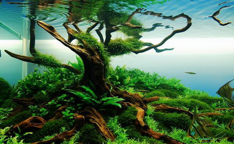 aquascaping14