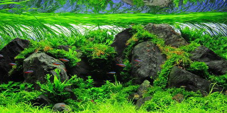 aquascaping15
