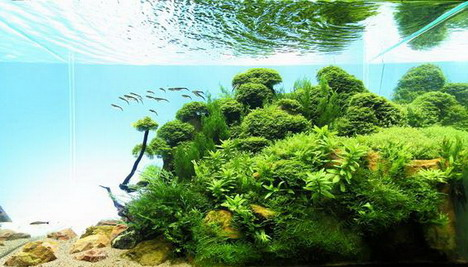 aquascaping17