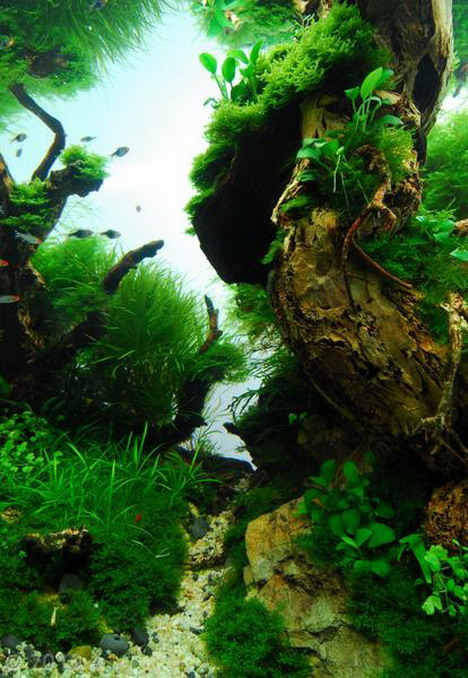 Aquascaping20