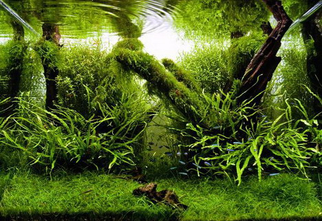 aquascaping21