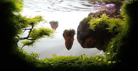 aquascaping23