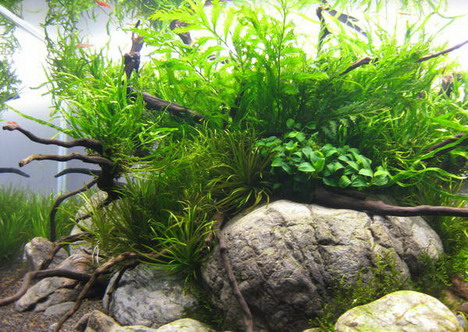 aquascaping24