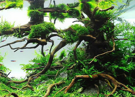 aquascaping25