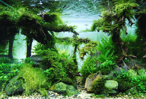 aquascaping27