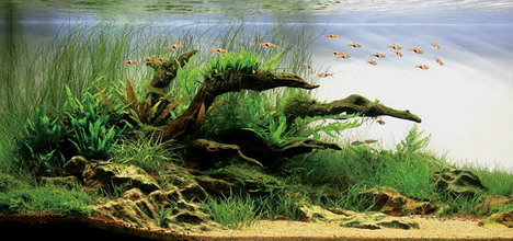 aquascaping30