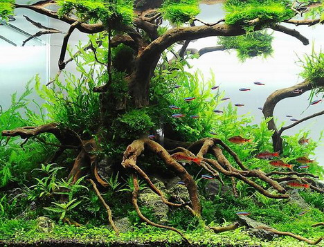 aquascaping32