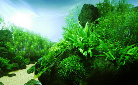 aquascaping33