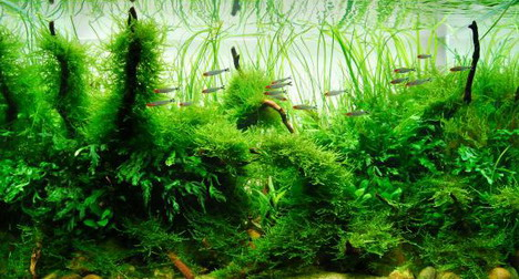 aquascaping35