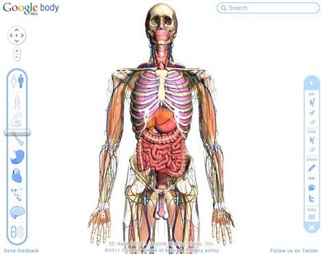 google_body