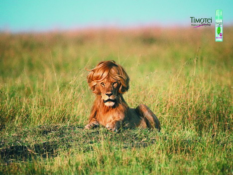 timotei_styling_mousse_lion