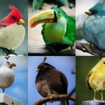 Best 70 Angry Birds Desktop Wallpapers and Photo Gallery (Ultimate Collection 2)