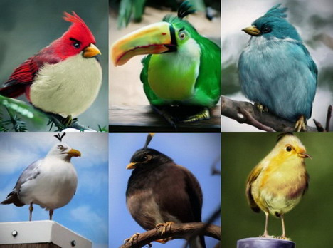 best_70_angry_birds_desktop_wallpapers_and_photo_gallery