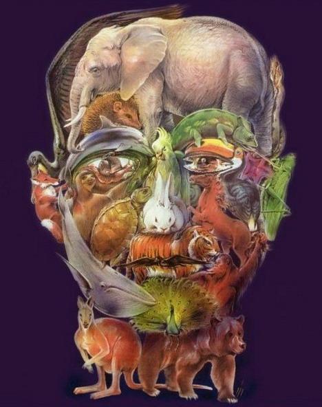animal_head_best_optical_illusion