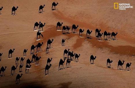 camel_shadow_illusion_best_optical_illusion