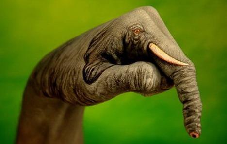 elephant_best_optical_illusion
