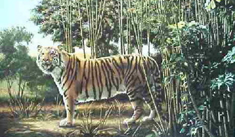 hidden_tiger_best_optical_illusion