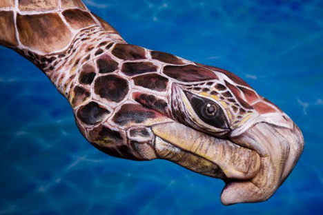 caretta_caretta_best_animal_hand_painting