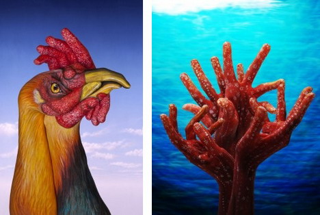cock_and_corals_best_animal_hand_painting