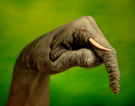 elephant_on_green_best_animal_hand_painting