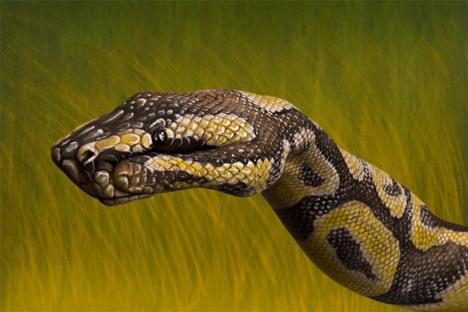 python_best_animal_hand_painting