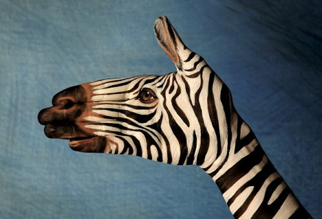 zebra_on_blue_best_animal_hand_painting