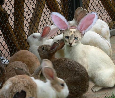 bunny_buddies_funny_creative_photo_manipulation_artworks