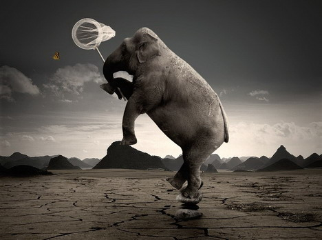crazy_elephant_funny_creative_photo_manipulation_artworks