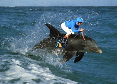 dolphin_racing_funny_creative_photo_manipulation_artworks
