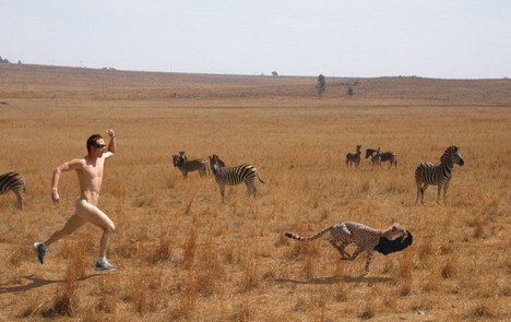 safari_run_funny_creative_photo_manipulation_artworks