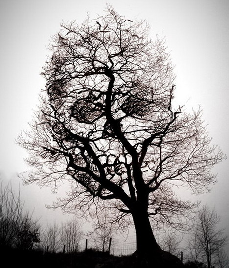 tree_of_death_funny_creative_photo_manipulation_artworks