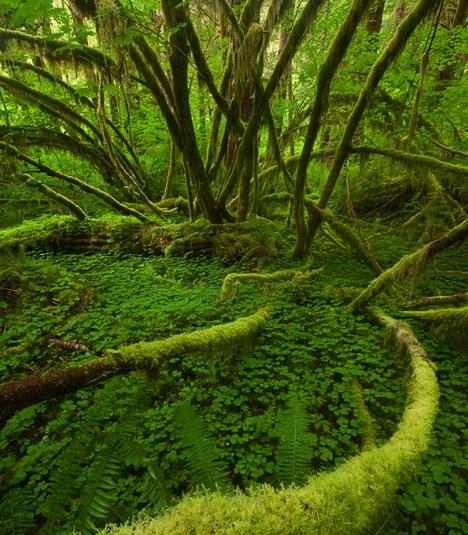 calming_chaos_beautiful_nature_landscapes_photographs