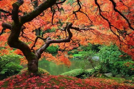 eden_beautiful_nature_landscapes_photographs