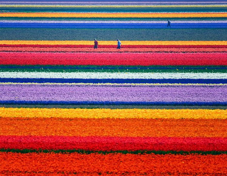 fields_of_gold_beautiful_nature_landscapes_photographs