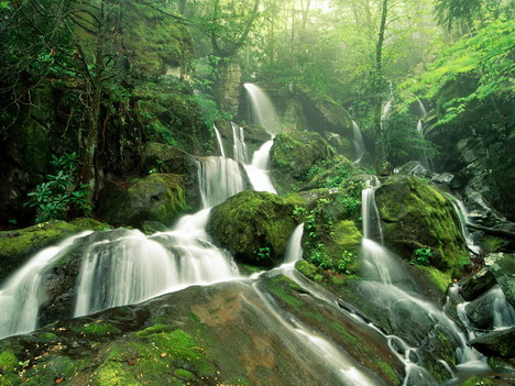 forest_fall_beautiful_nature_landscapes_photographs