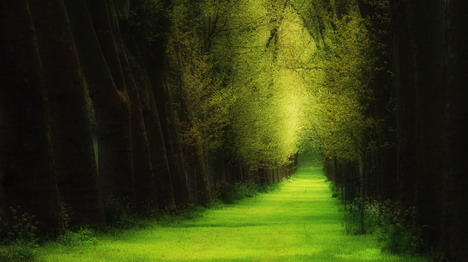 forest_like_a_dream_beautiful_nature_landscapes_photographs